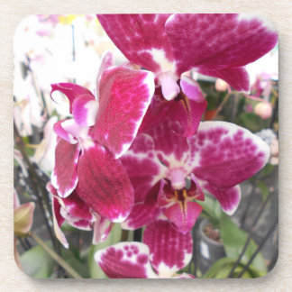 Purple Splotched Phalaenopsis Orchids Coaster