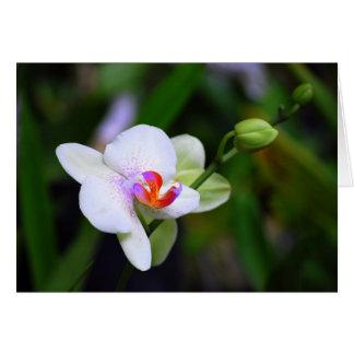 Purple Spotted Phalaenopsis Orchid Card
