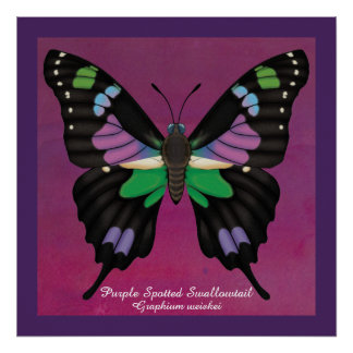 Purple Spotted Swallowtail Poster