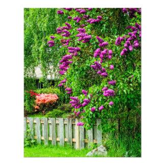 Purple Spring Flowers Photo