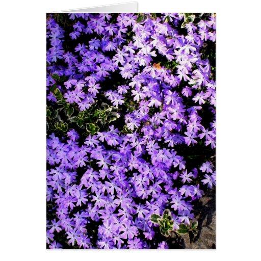 'Purple Springtime'  Blank Greeting Card