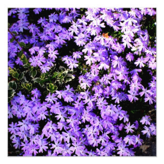 Purple Springtime Photographic Print
