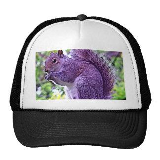 Purple Squirrel Cap