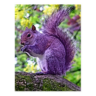 Purple Squirrel Postcard