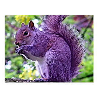 Purple Squirrel Postcard