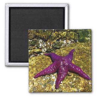 Purple Starfish Magnet