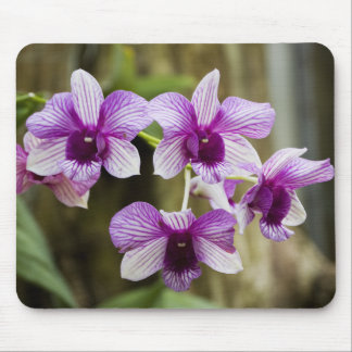 Purple Striped Orchid Flower Mouse Mat
