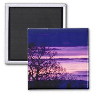Purple Sunset Tree Silhouette fridge magnet