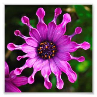 Purple Sunshine Photograph