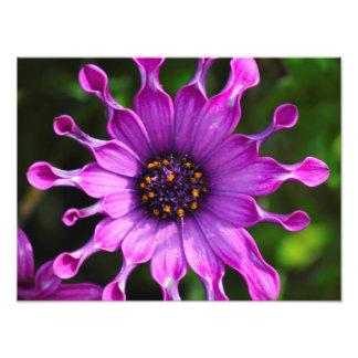 Purple Sunshine Photographic Print