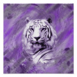 Purple Tiger Poster