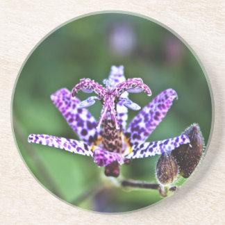 Purple Tricyrtis Toad Lily flower Beverage Coaster