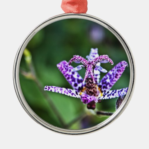 Purple Tricyrtis Toad Lily flower Christmas Ornaments
