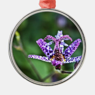 Purple Tricyrtis Toad Lily flower Silver-Colored Round Decoration