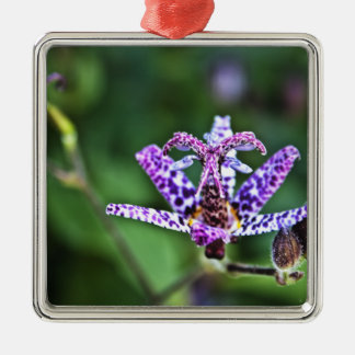 Purple Tricyrtis Toad Lily flower Silver-Colored Square Decoration