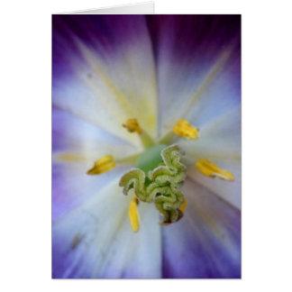 Purple Tulip Greeting Card