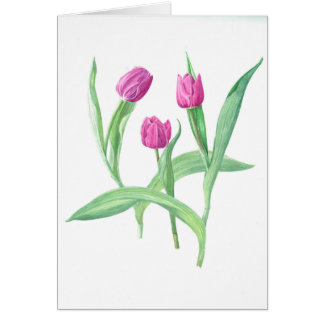 purple tulip cards