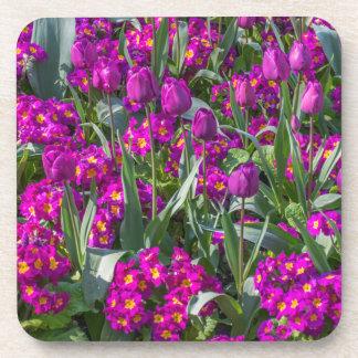 Purple tulips and primroses hard plastic coasters