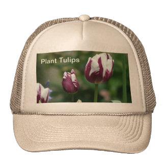Purple Tulips Mesh Hats