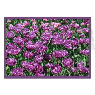Purple Tulips Card