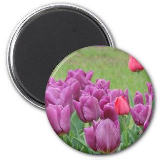 Purple Tulips Flowers Beautiful Blooms 6 Cm Round Magnet