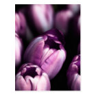 Purple Tulips Postcard