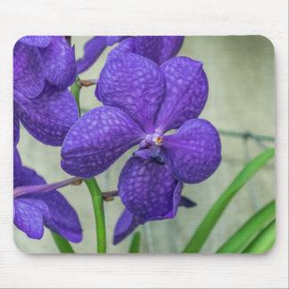 Purple vanda orchids mousepad
