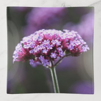 Purple Verbena Flower Trinket Tray