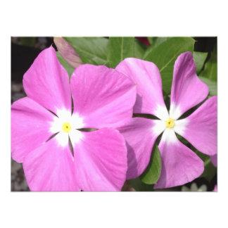 Purple Vinca Flowers Photo Print