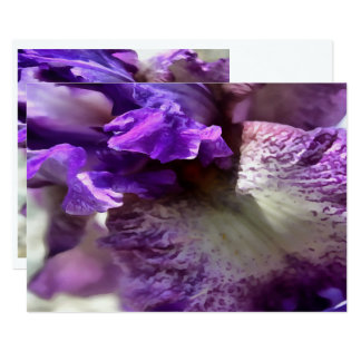 Purple, Violet and Mauve Iris Abstract Card