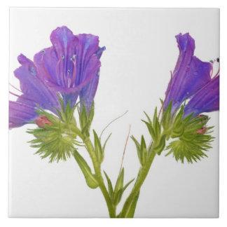 Purple vipers bugloss (echium plantagineum) tile