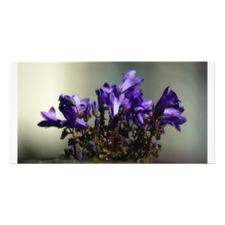 Purple Wall Flowers Personalized Photo Card