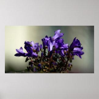 Purple Wall Flowers Poster