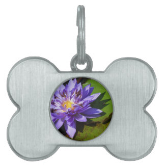 Purple water lilies floating in a pond pet name tag