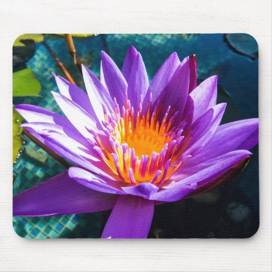 Purple Water Lilies Mouse Mat
