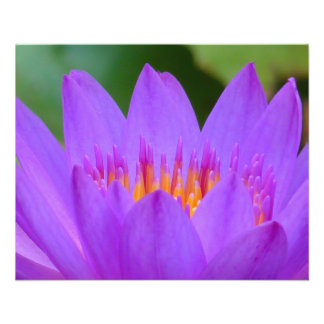 Purple Water Lily Flower Blossom Flyers