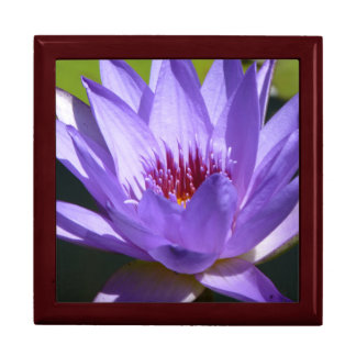 Purple Water Lily Large Square Gift Box