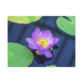 Purple waterlily canvas print