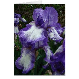 Purple & White Iris, Special Birthday Card