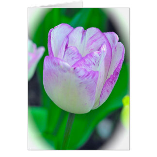 Purple & White Tulip (photog) Note Card