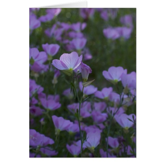purple wildlfowers everywhere card