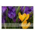Purple & Yellow Crocuses DSC5929