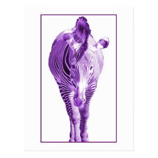 Purple Zebra Postcard