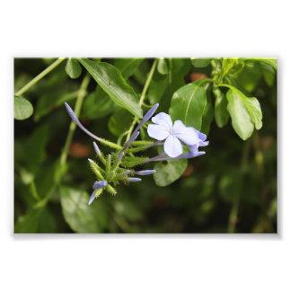 Purpled Flower Art Photo