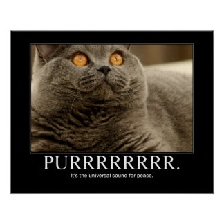 Purr is the universal sound for peace Artwork Poster