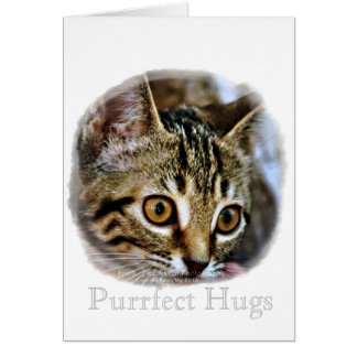 Purrfect Baby Kitten gift collection Greeting Card