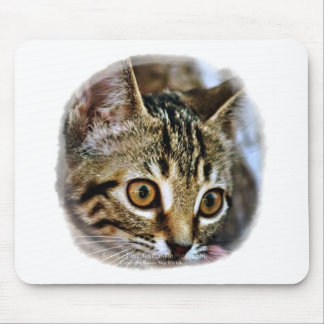 Purrfect Baby Kitten gift collection Mouse Pad