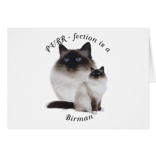 Purrfection Birman Greeting Card