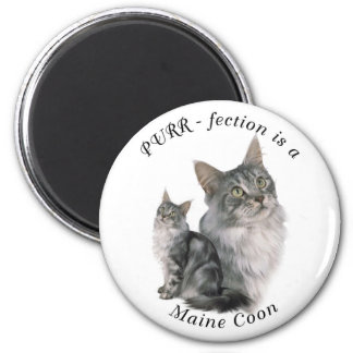 Purrfection Maine Coon Button Magnet