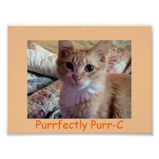 PURRFECTLY PURR-C Poster